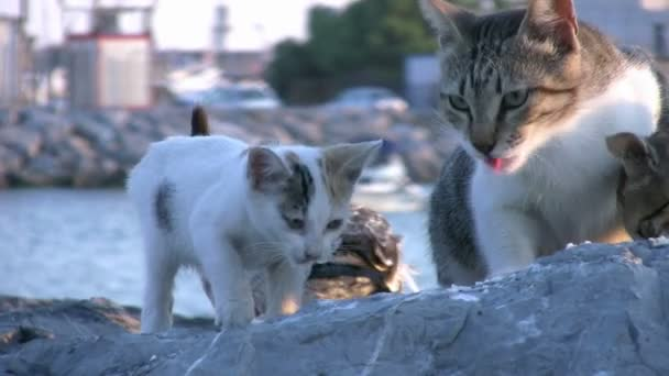Cats and seagull eating together