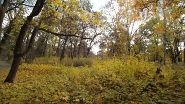 Parco in autunno. Autunno doro. Foglie gialle. Tipico ucraino natura della caduta. -Video stock