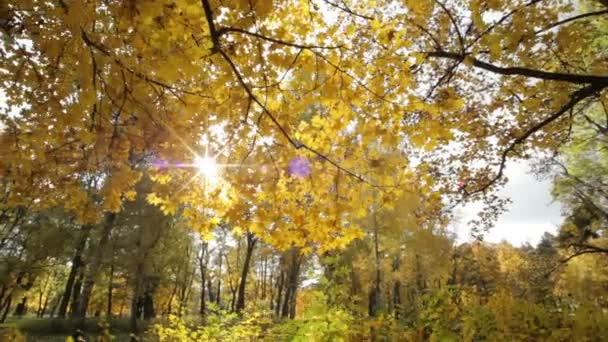 Podzimní Park. Zlatý podzim. Žluté listy. Typická ukrajinská povaha pádu. -Video skladem