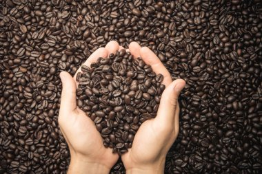 Pair of hands holding coffee beans
