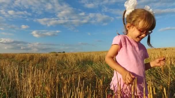 Dívek v brýlích shromažďuje slámy na poli. Ona bere stébla slámy na poli již sklizené.