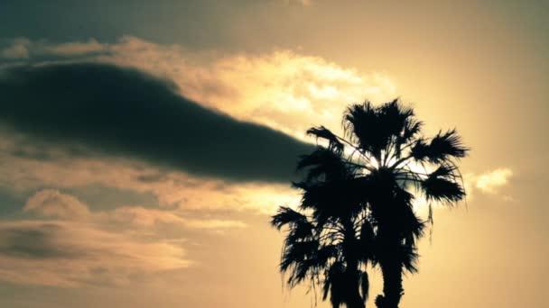A nap hosszú pálmafa