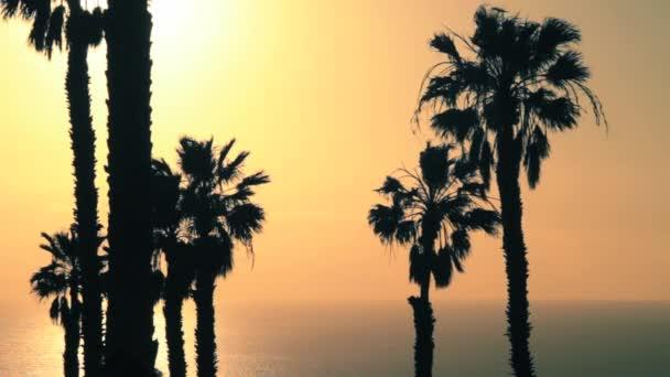A pálmafák, a nap két csoportja