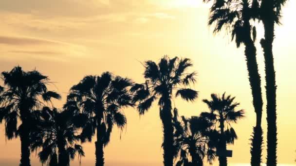 Pálmafák a nap