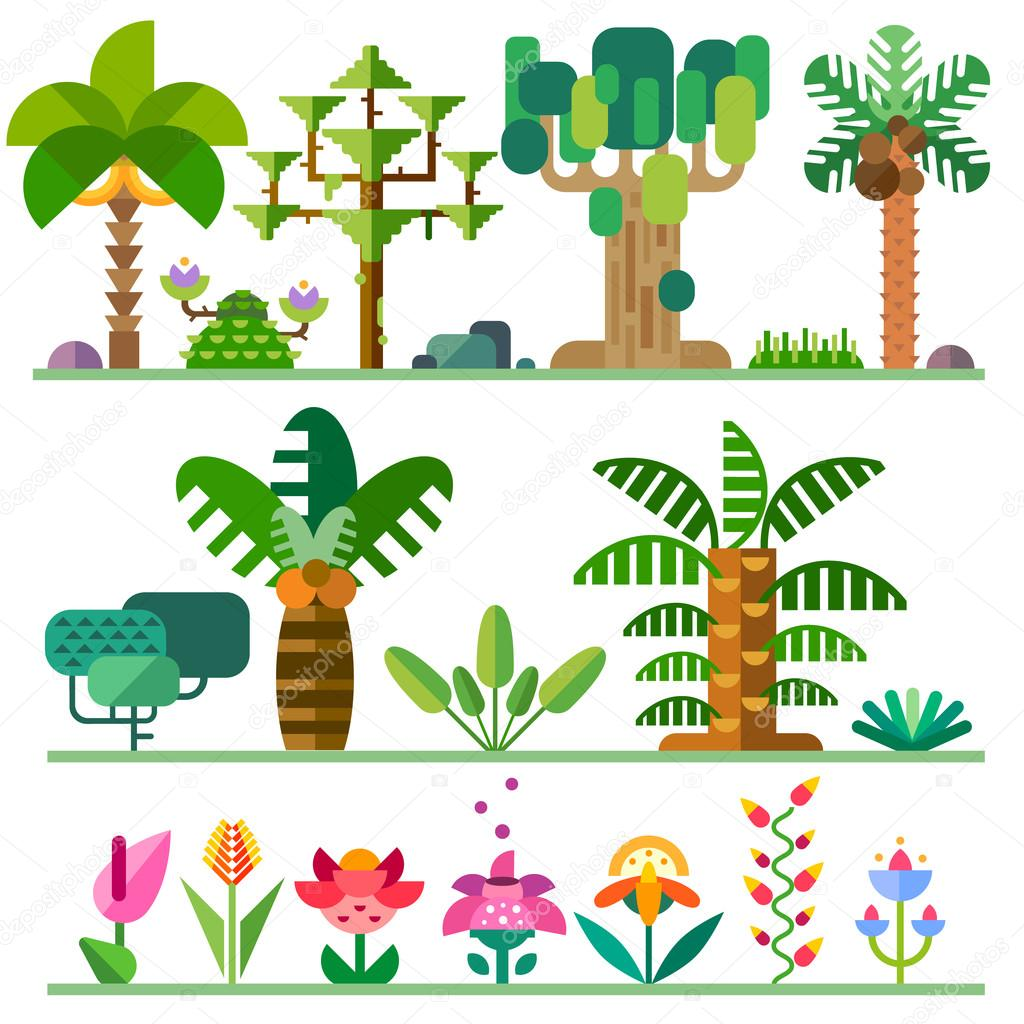 Tropical plants. Different types of trees, flowers