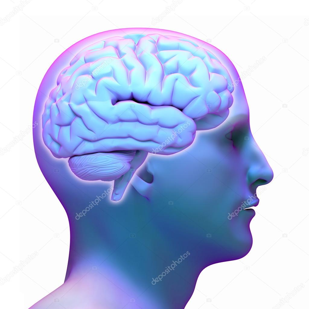 Brain diagram in human head on white background stock photo brain diagram in human head on white background fotografia de stock ccuart Images