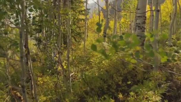 krásná krajina. březový les. bílá bříza kufry