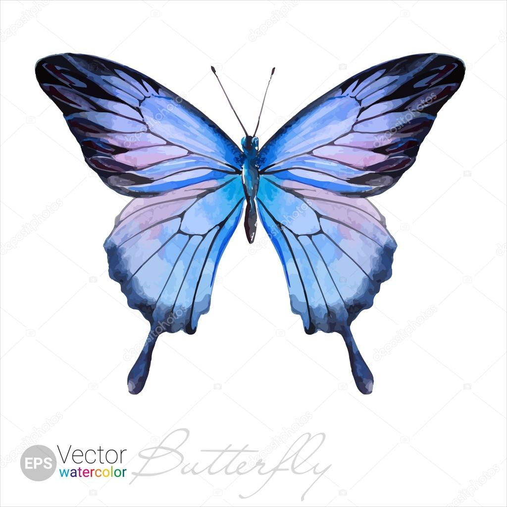 Vector Watercolor Butterfly The Ulysses butterfly. Blue ...