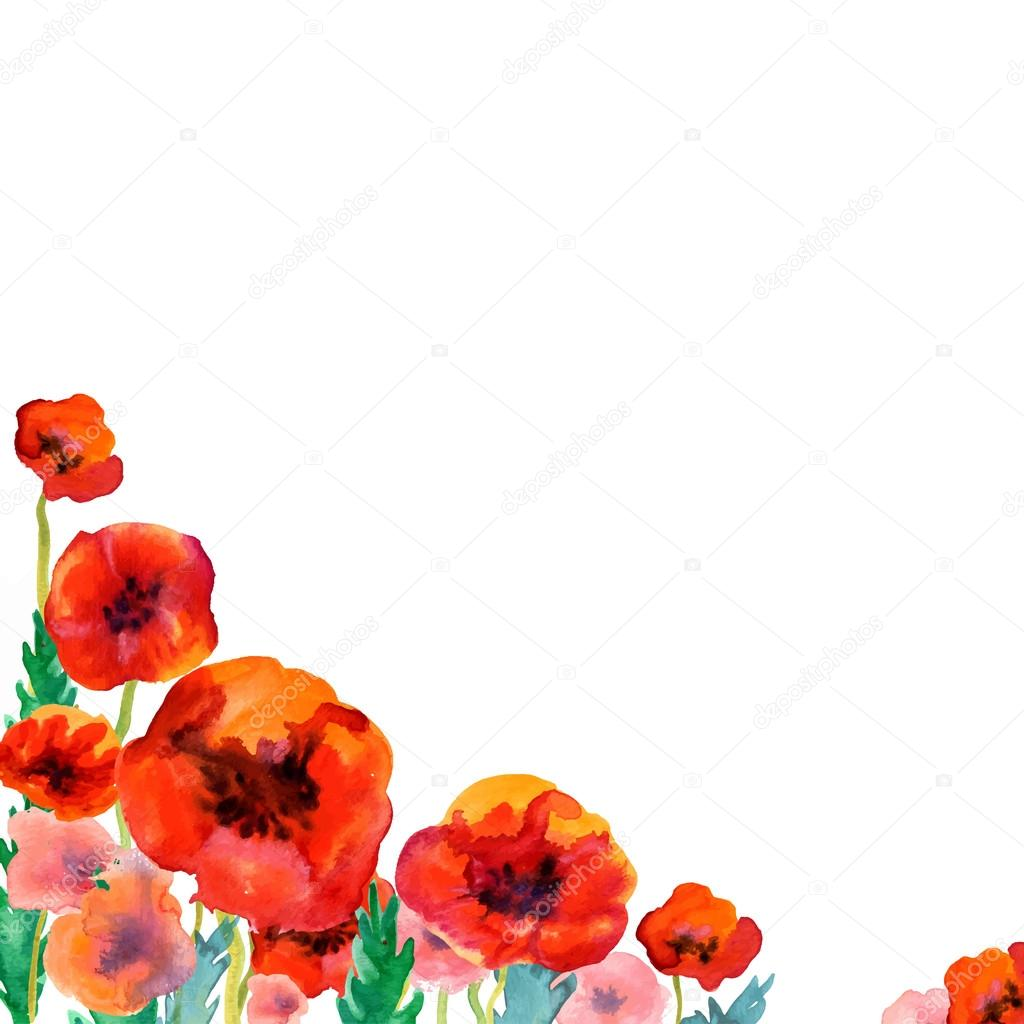 White background with watercolor poppies and copy space