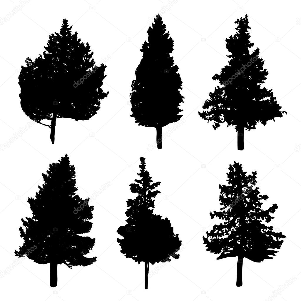Silhouettes of different kind of fir and pine trees