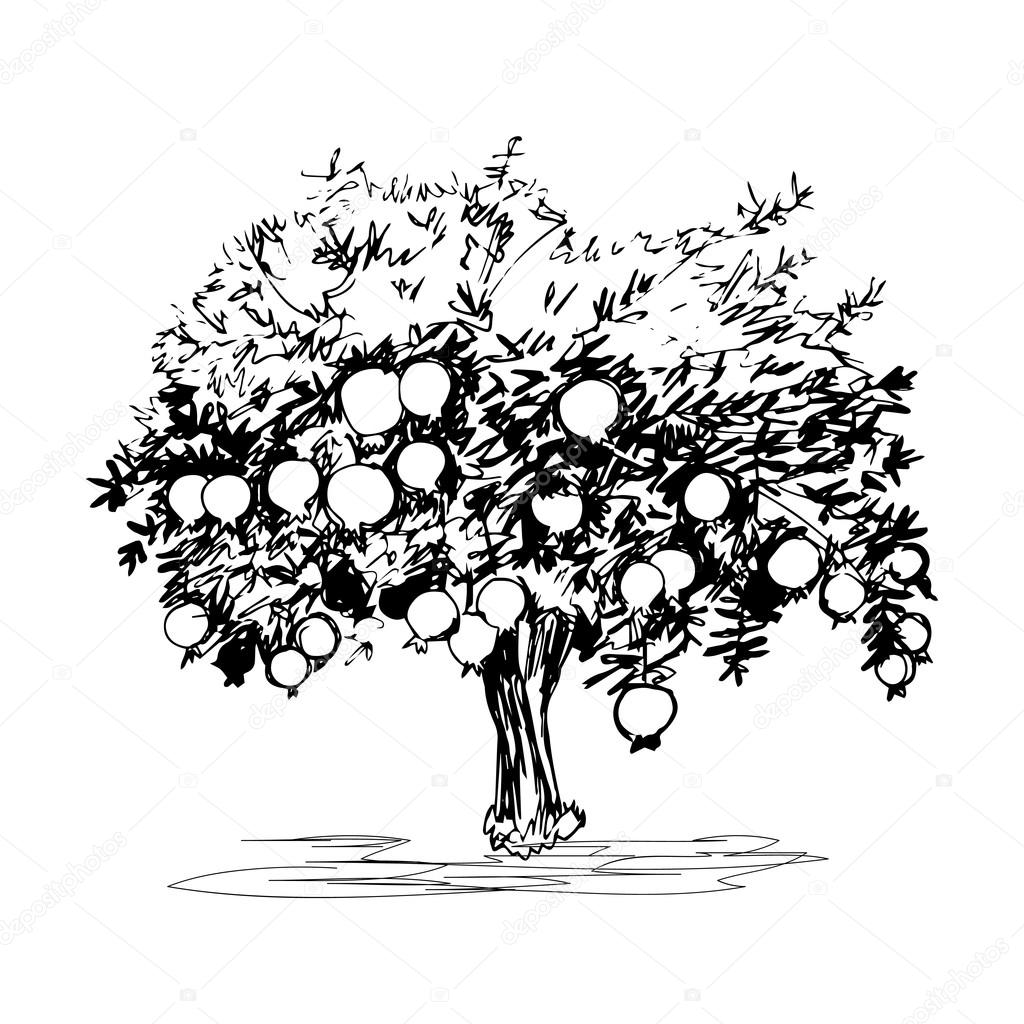Hand Drawn Pomegranate Tree On White Background Vector Image By C Naniti Vector Stock 90697948