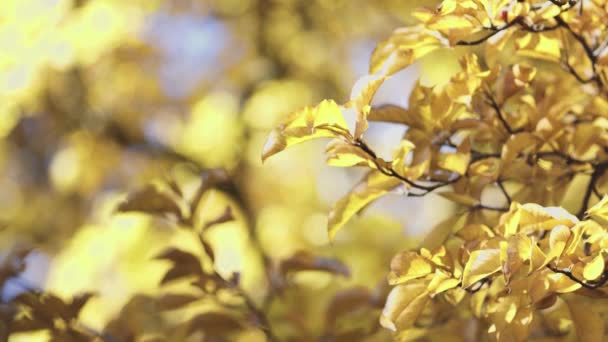 yellow leaves growing on tree branches on sunny autumn day