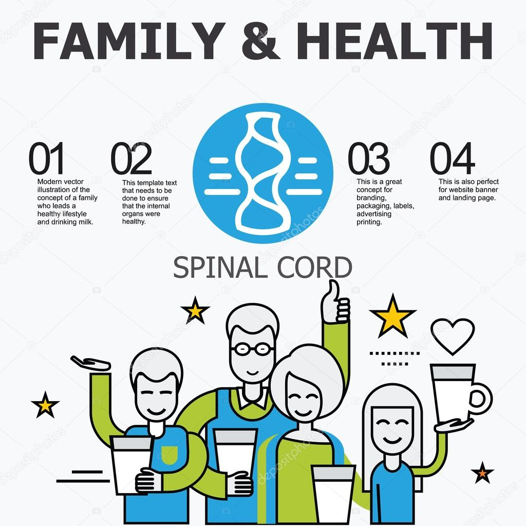 Internal Organs Spinal Cord Otay 109784210