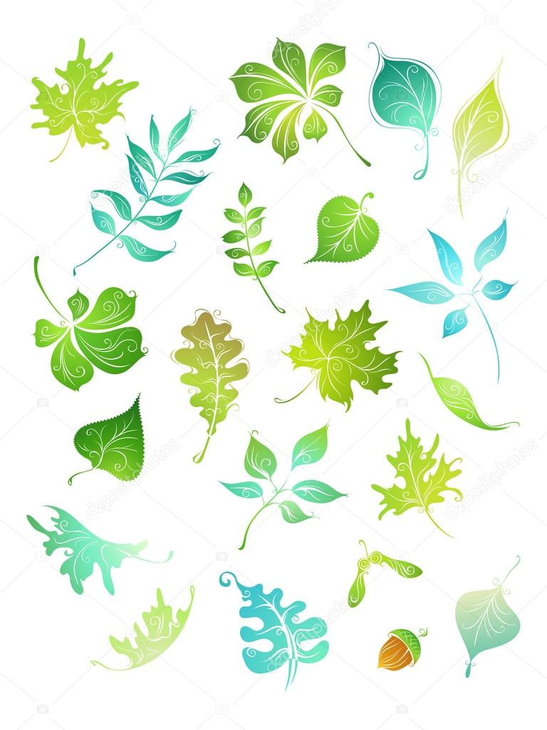 Vector green leaves.