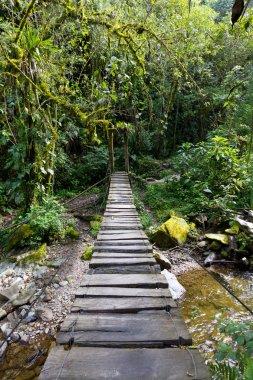Swing Bridge in the rainforest