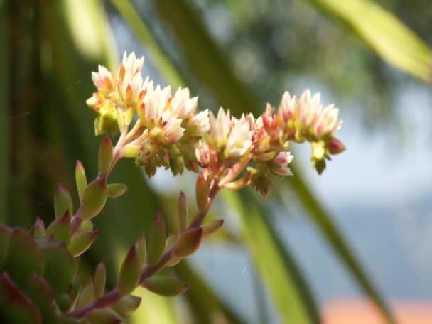 sukulentní rostlina