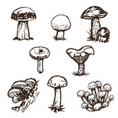 Fotografie mushrooms sketch set.