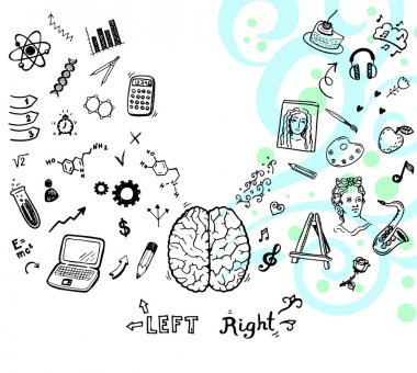left and right brain function.
