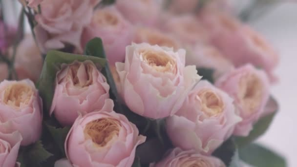 Gorgeous pink flowers