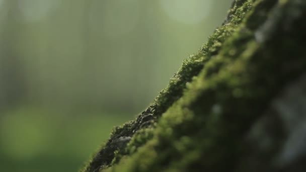 Green moss on a tree