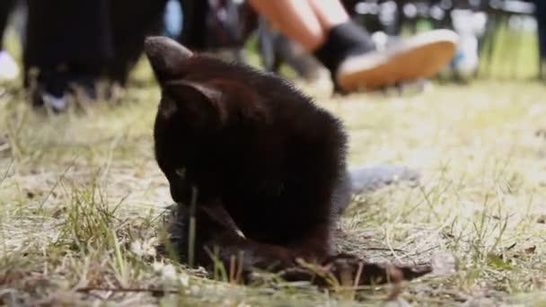 Schwarzes Kätzchen. Verspielte Kätzchen. Lustige Tier