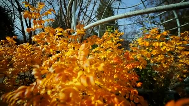 Podzimní příroda. Kovové konstrukce ve tvaru zeměkoule