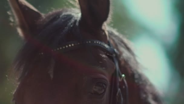 The eyes of the horse. Muzzle horse. Horse Blinking in slow motion.