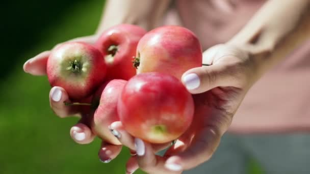 Five apples in female hands. Apple orchard. Summer garden. Harvesting.