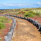 Trail through the landscape of Tenerife, Canary Islands