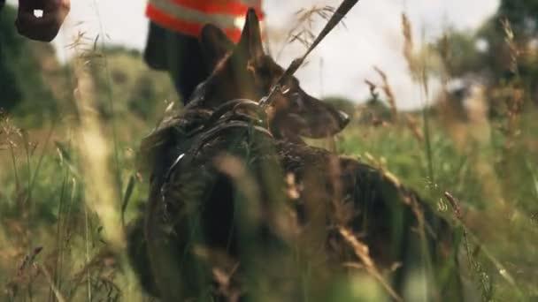 Dog near rescuers in field