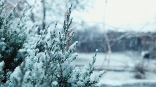 první sníh padá na stromě