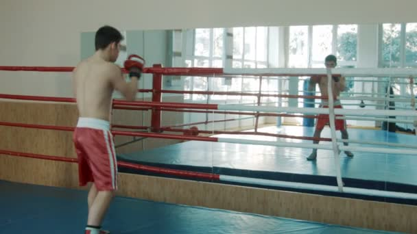 The young boxer trains on a ring opposite to a mirror