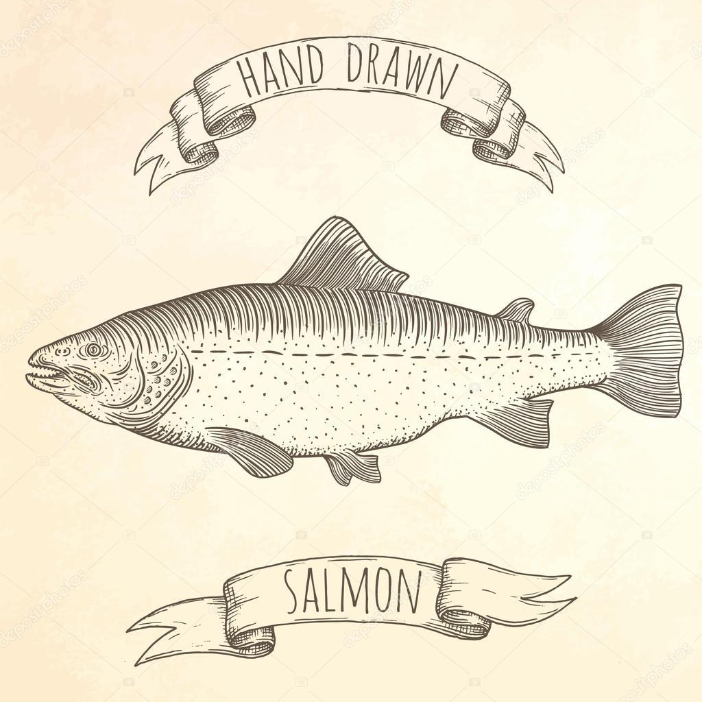 Salmon hand drawn illustration.