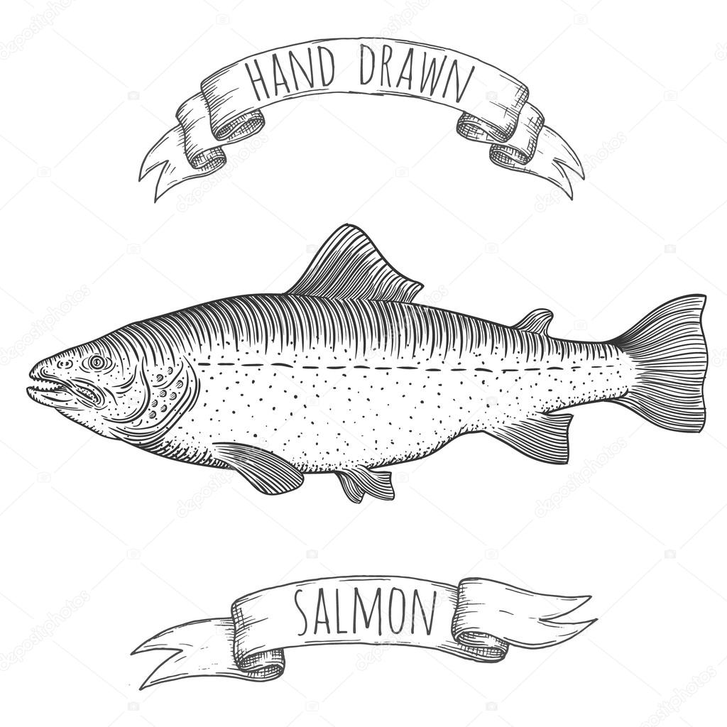 Salmon hand drawn illustration.