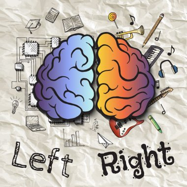 The left and right hemispheres of the brain.