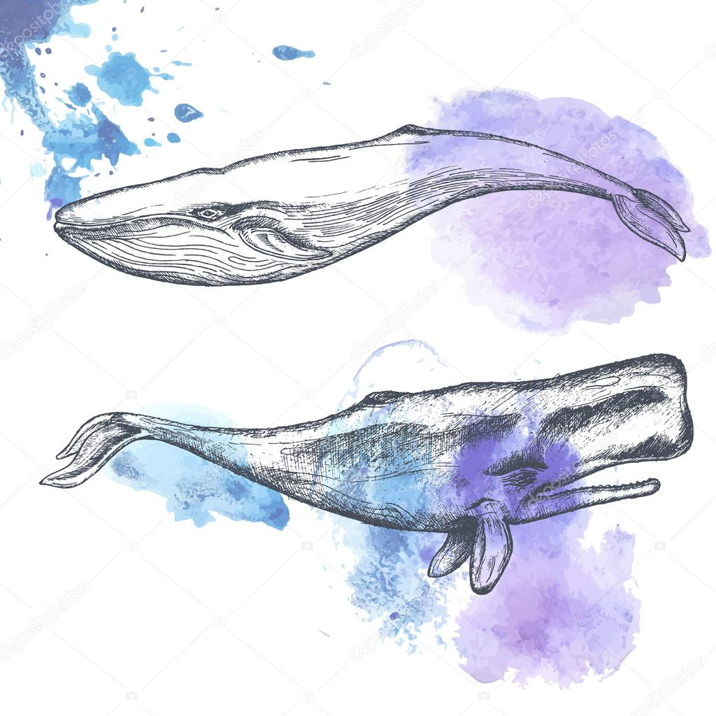 Hand drawn whales.