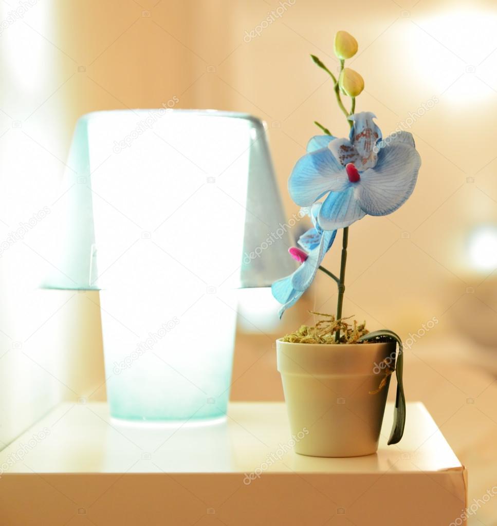 piccolo fiore di orchidea blu in vaso sul tavolo, orchidea vicino ... - Orchidea In Camera Da Letto