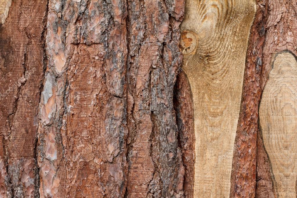 Grezzo di tavole di legno di sfondo corteccia — Foto Stock ...