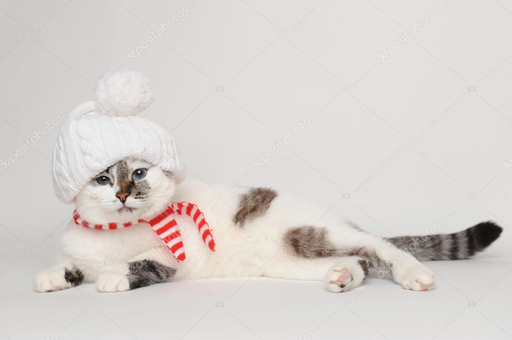 Carino gatto in un cappello bianco con un pompon e sciarpa a strisce — Foto  di sorockina de4ce20ae283