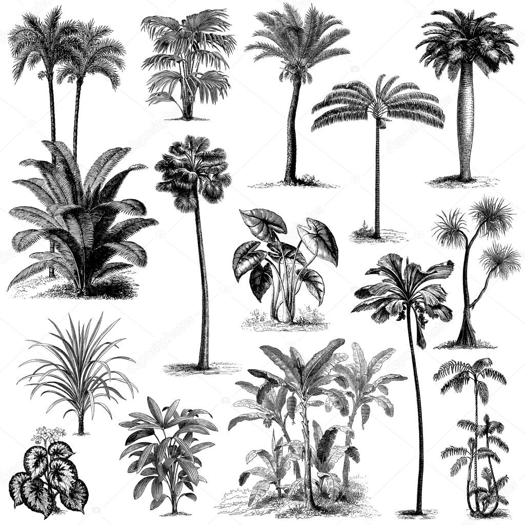 Vintage hand drawn palm trees set 2 stock vector pingebat big set of vintage hand drawn palm tree and bushes illustrations vector by pingebat altavistaventures Image collections