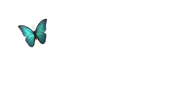 létající motýl