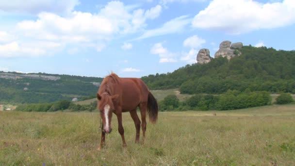 Pferd und Fohlen auf der Weide