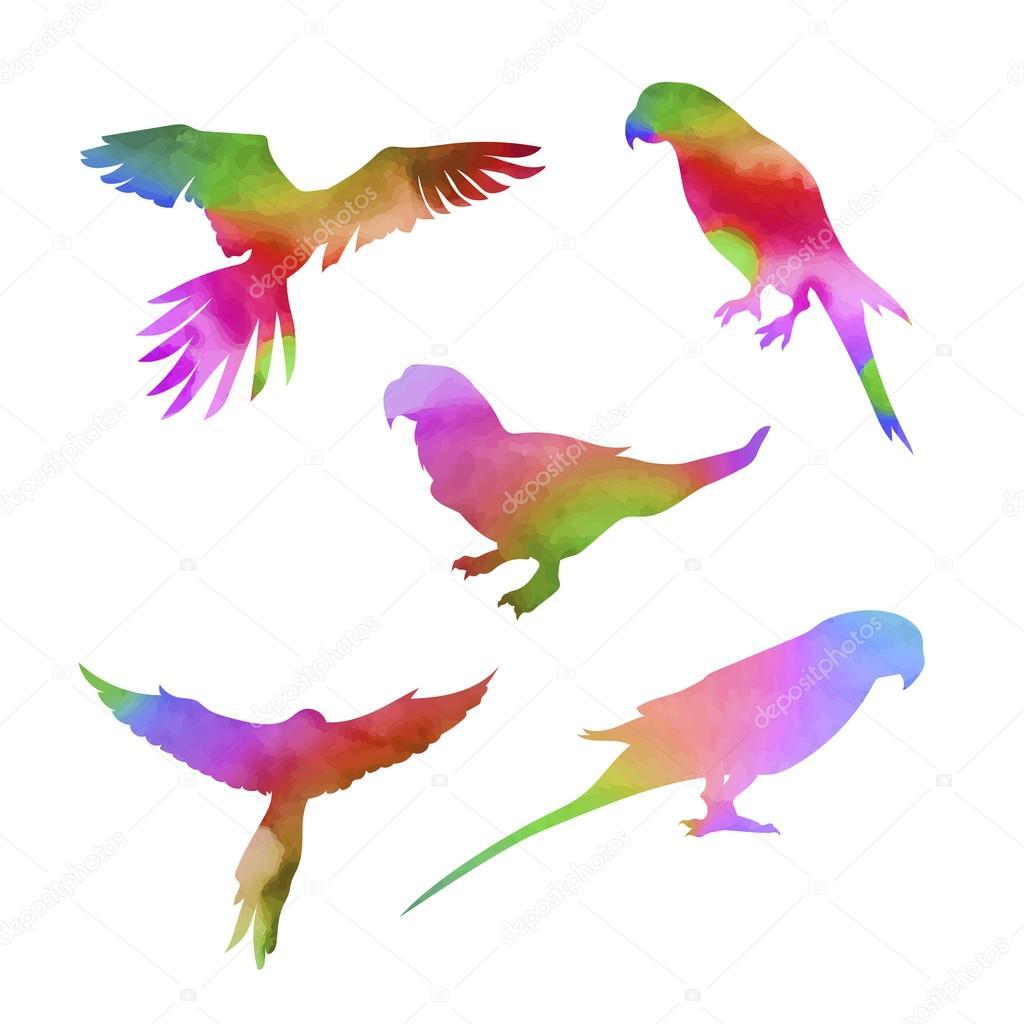 Vector watercolor parrot set