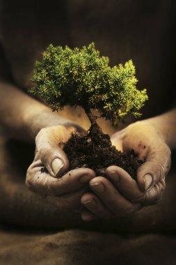 seedling growing in hands