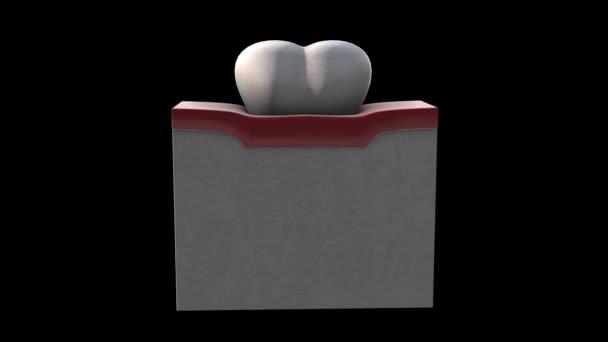3D-Modellanimation auf schwarzem Hintergrund