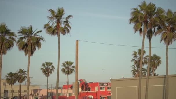 Posunout pravý pohled na palmy