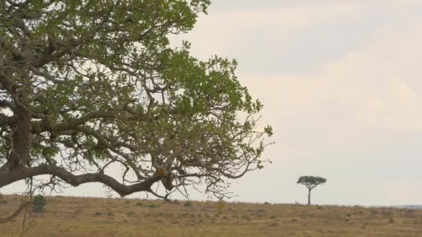 Branches and a tree in Maasai Mara
