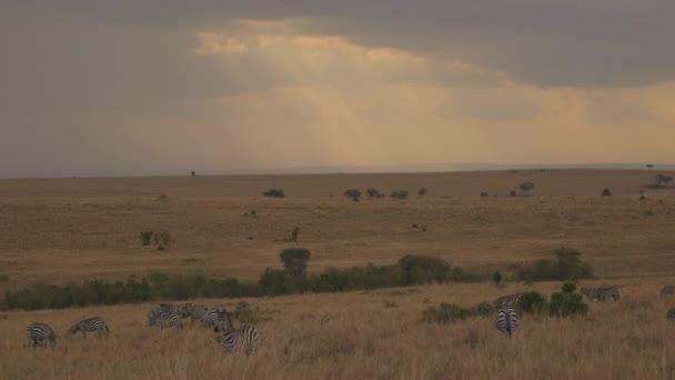 Sima zebrák egy felhős napon