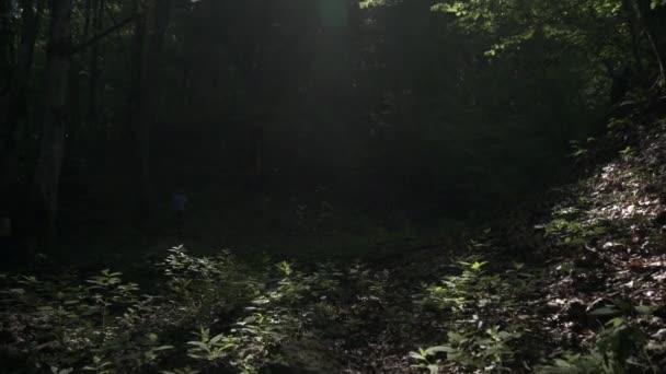 Slunce svítí skrz lesní stromy