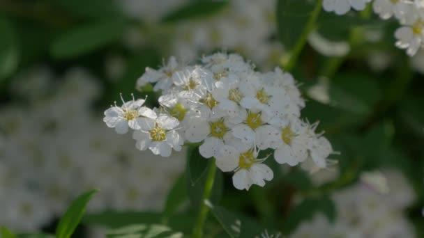 Zavřít pohled bílé květy